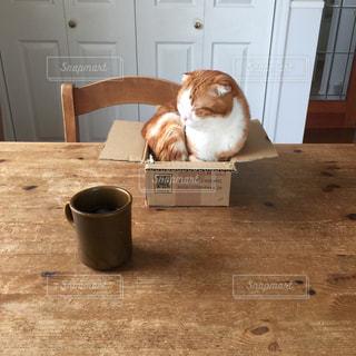 猫の写真・画像素材[282882]