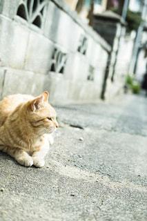 歩道に横たわっている猫の写真・画像素材[3329736]