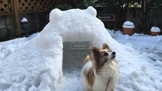犬,雪,庭,かまくら,冬物語