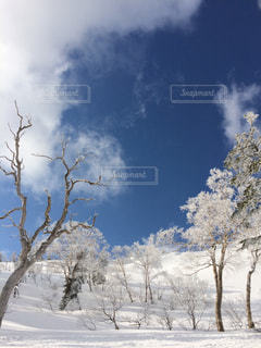 自然の写真・画像素材[293151]