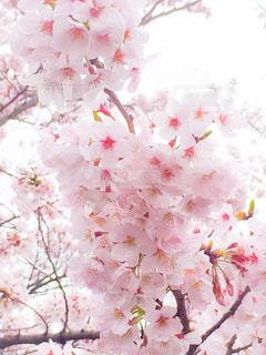 花の写真・画像素材[328066]