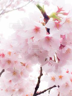 花の写真・画像素材[328067]