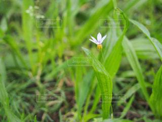 自然の写真・画像素材[293348]