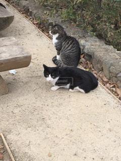 猫の写真・画像素材[295743]