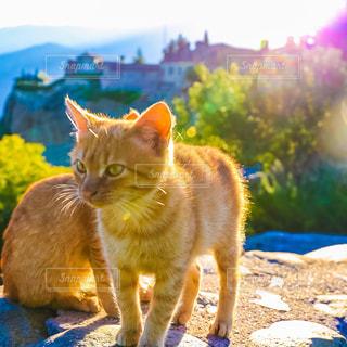猫の写真・画像素材[293636]