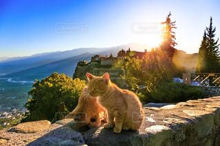 夕日の中の子猫の写真・画像素材[294252]