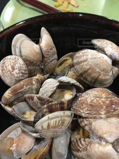 貝の写真・画像素材[317054]
