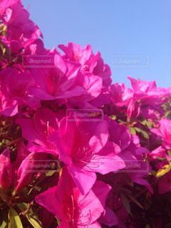 花の写真・画像素材[293959]