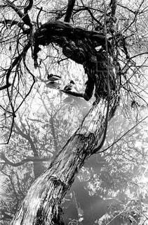 鳥籠の写真・画像素材[702238]