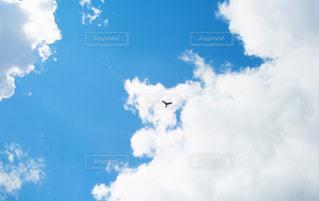 青空と鳥の写真・画像素材[702490]