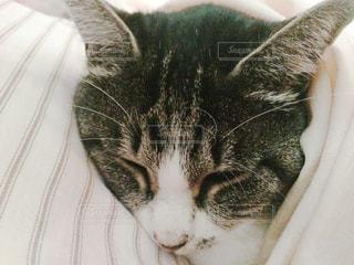 猫の写真・画像素材[397269]