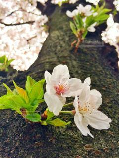 花の写真・画像素材[423915]