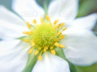 花の写真・画像素材[431101]
