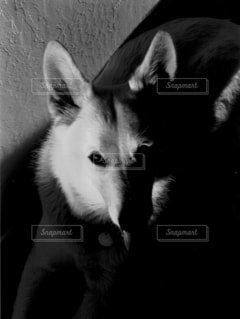 カメラ目線の写真・画像素材[1629728]
