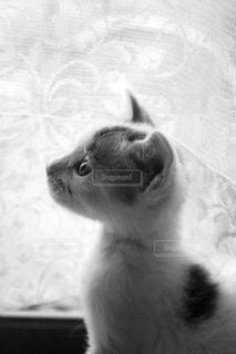 窓際にたたずむ子猫の写真・画像素材[2151457]