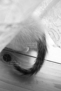 頭隠して尻隠さず、カーテンの下に隠れる子猫の写真・画像素材[2151460]