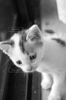 窓の外を見る子猫の写真・画像素材[2151461]