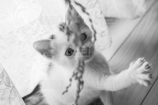 稲穂に戯れるかわいい子猫の写真・画像素材[2151462]