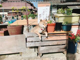 犬の写真・画像素材[600164]