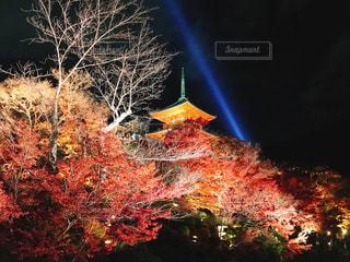 清水寺、紅葉と夜のライトアップ - No.886069