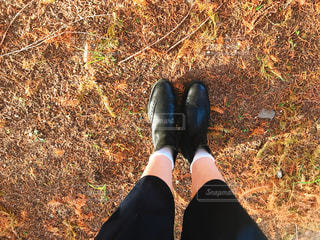 秋の足もとの写真・画像素材[900829]
