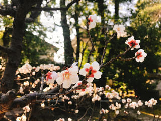 春はもうすぐの写真・画像素材[1051656]