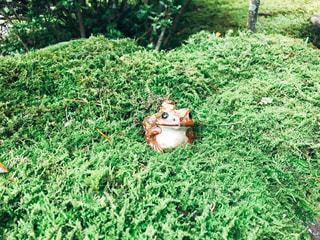 京都のお寺のお庭にいたカエルの写真・画像素材[1502233]