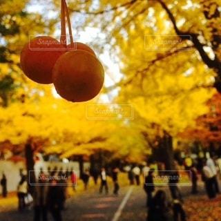 秋の写真・画像素材[1637]