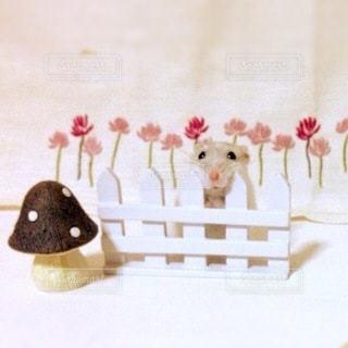 花の写真・画像素材[1619]
