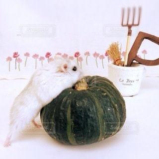 食べ物の写真・画像素材[1614]