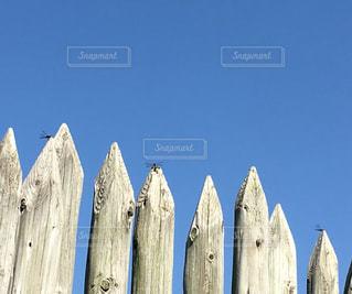 秋の空にトンボ見つけたの写真・画像素材[2495911]
