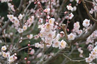花の写真・画像素材[364293]