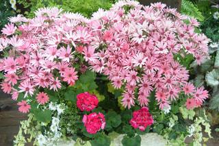 花の写真・画像素材[364402]