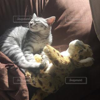 猫の写真・画像素材[294587]