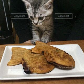猫 - No.294837