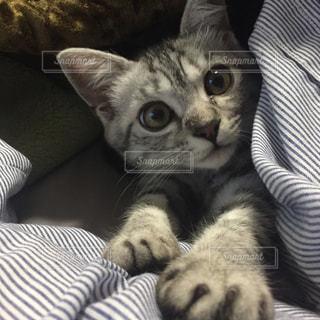 猫 - No.294851