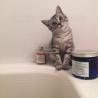 猫の写真・画像素材[294852]