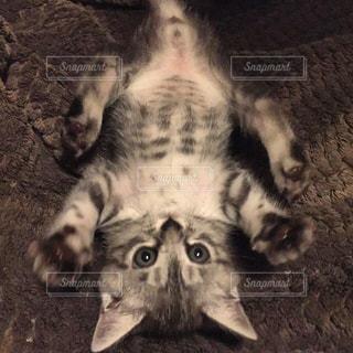 猫の写真・画像素材[295017]