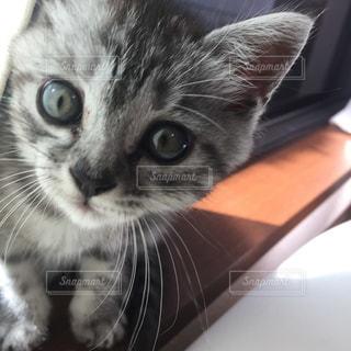 猫の写真・画像素材[295113]