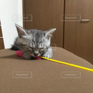 猫の写真・画像素材[295121]