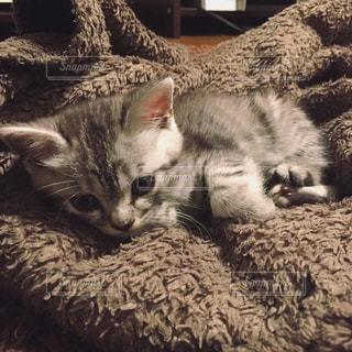 猫の写真・画像素材[295124]