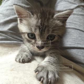 猫 - No.295251