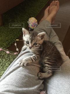 猫の写真・画像素材[295253]