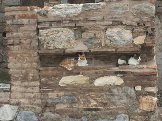 猫の写真・画像素材[297512]