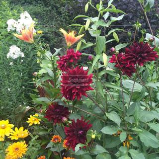 花の写真・画像素材[297575]