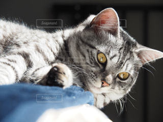 猫 - No.378849