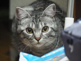 No.378862 猫