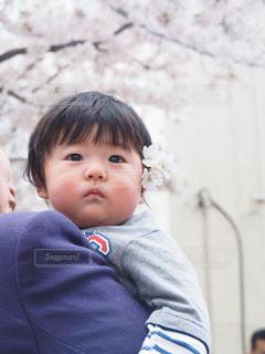 桜 - No.430793