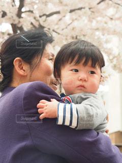 桜の写真・画像素材[430794]