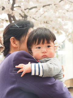 桜の写真・画像素材[430796]